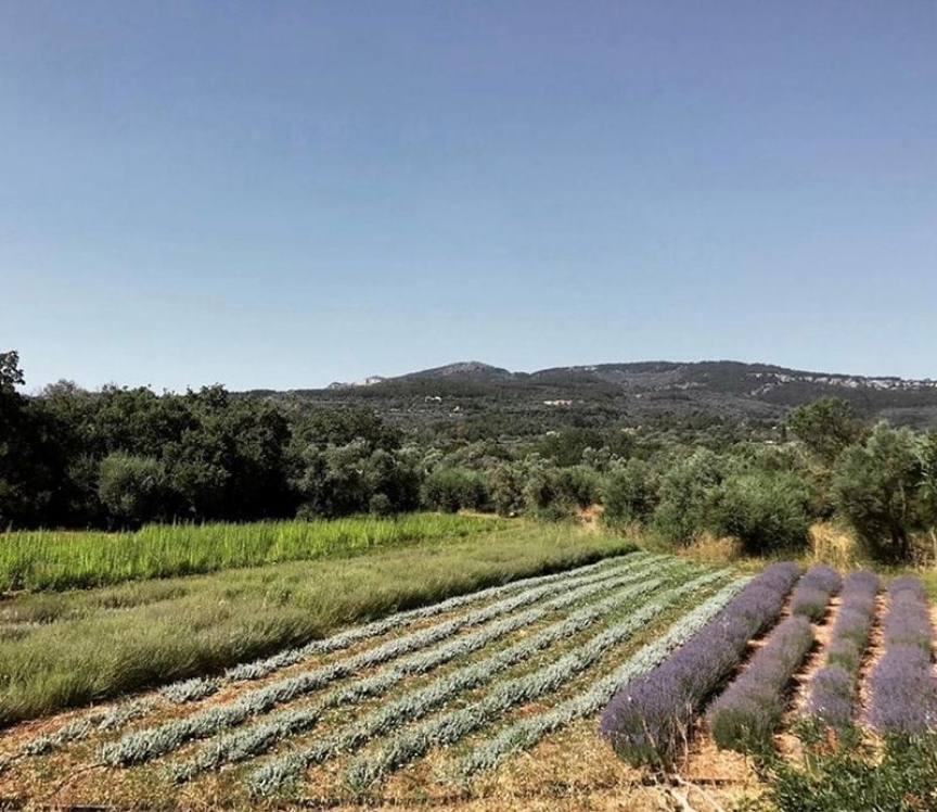 Chios island's aromatic herbs